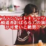 『ブランケットキャッツ』島崎遥香(ぱるる)の演技が可愛いと絶賛!
