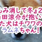 もみ消して冬2話、山田涼介が抱いてた犬はチワワのラムネちゃん!